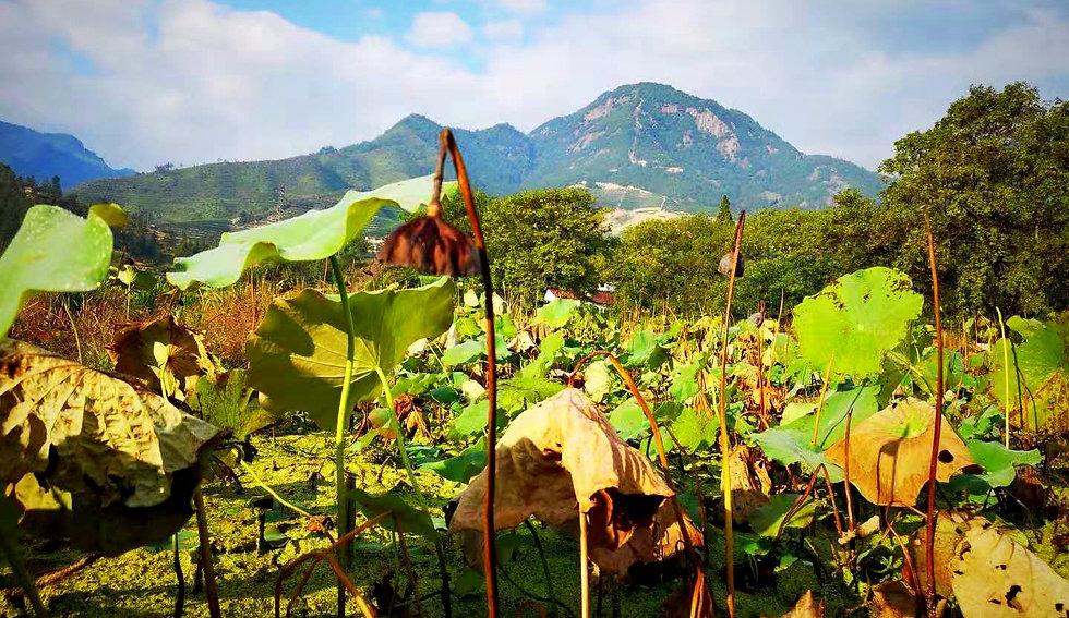 Field, China