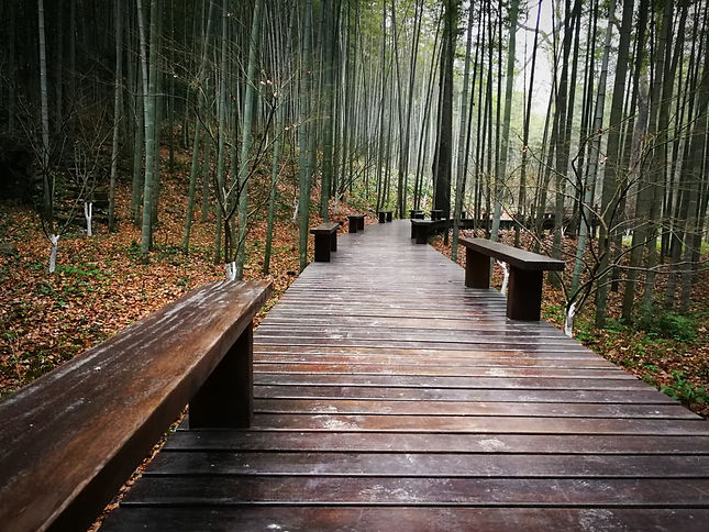 Wooden path at Yunqi