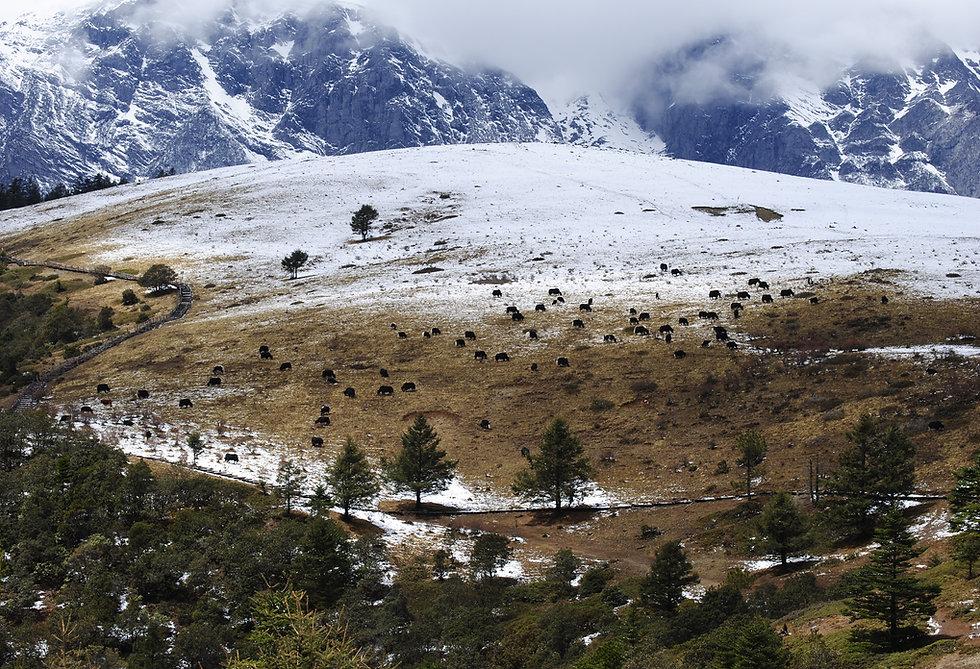 Yulong mountain, n