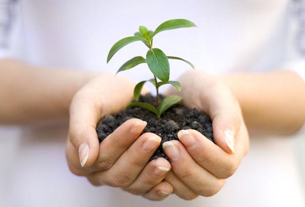 Shutterstock seedling hands.jpg