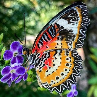 Ферма тропических бабочек