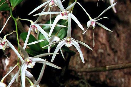 Daemulum-Flowers.jpg