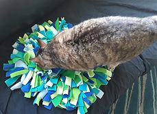 Futterbeschäftigung Katze