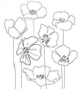 poppy sketch.jpg