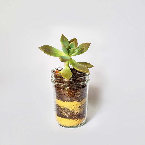 Succulent in a Jar Craft Kit
