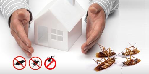 الحماية ومكافحة حشرات وقوارض