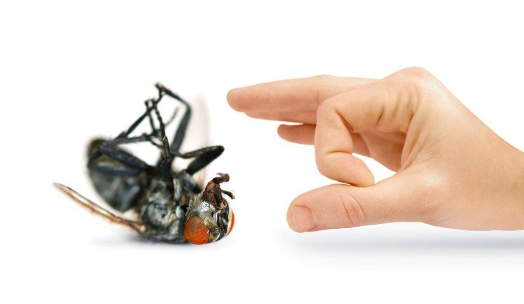 مكافحة حشرات الجهراء ناموس وذباب