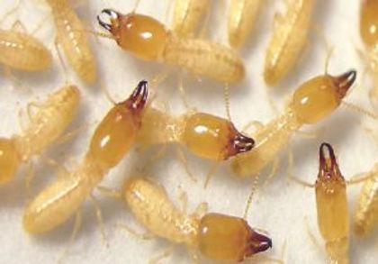 مكافحة حشرات وقوارض اثاث