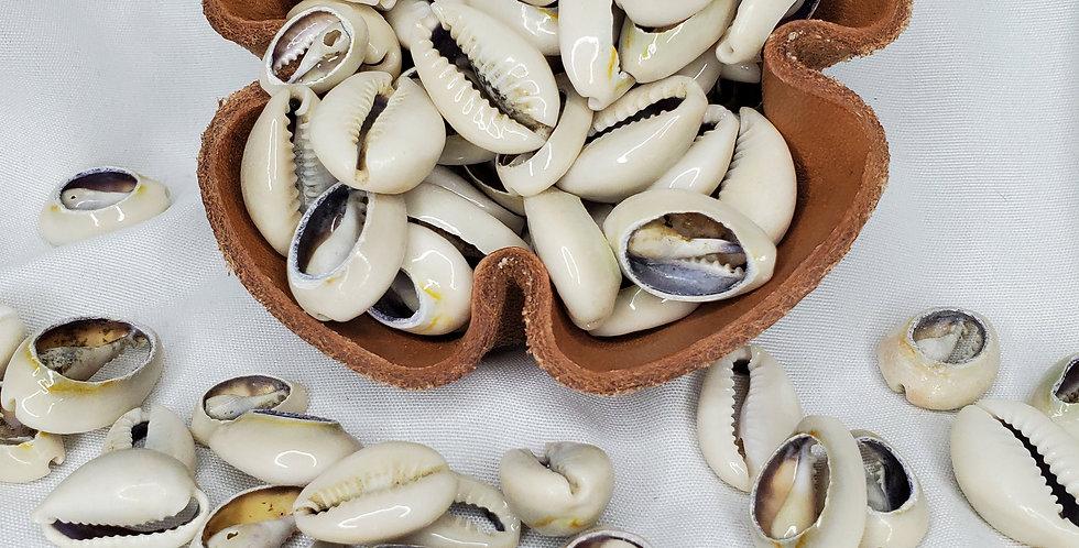 Cowrie Shells (2)