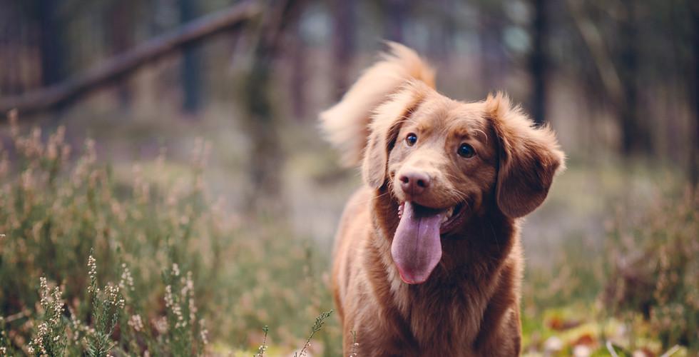 Mankato Pet Cremation Dog Photo.jpg