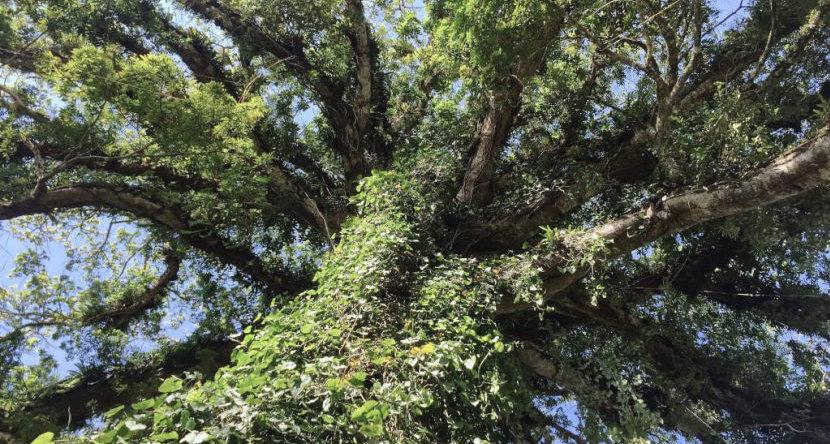 Avatar tree.jpg