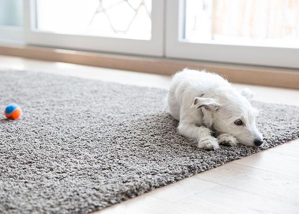 elite hosuekeeping carpet cleaning pets.