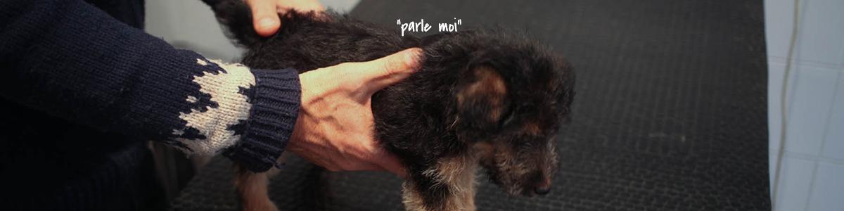 Ostéopathie vétérinaire chien