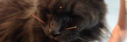 Acupuncture vétérinaire chat