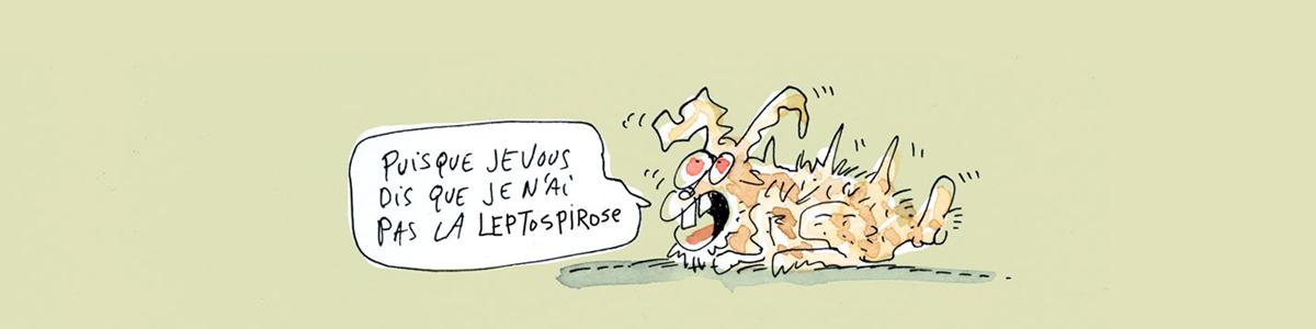 maladie-Leptospirose