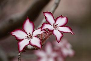 flower-191909_1920 (2).jpg