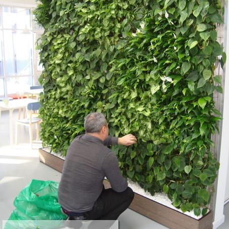 Уход за «зеленой» стеной