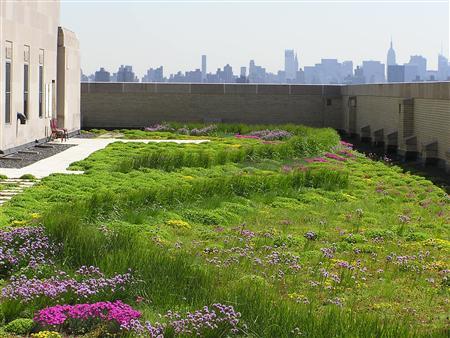 5 чувств для создания идеальной зеленой крыши