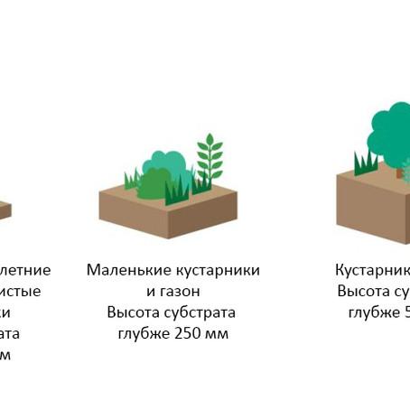 Классификация растений для зеленых крыш