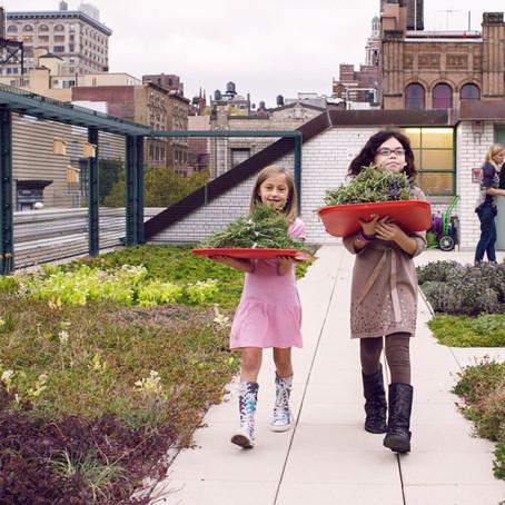 Зеленые крыши государственных школ, как новый инструмент в образовании