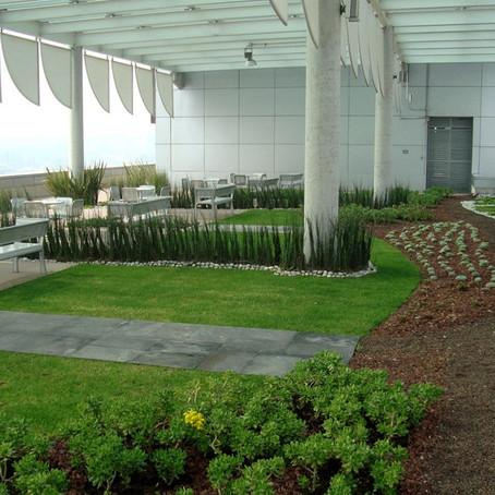 Зеленый парк на крыше высотки борется с нагрузкой водостоков