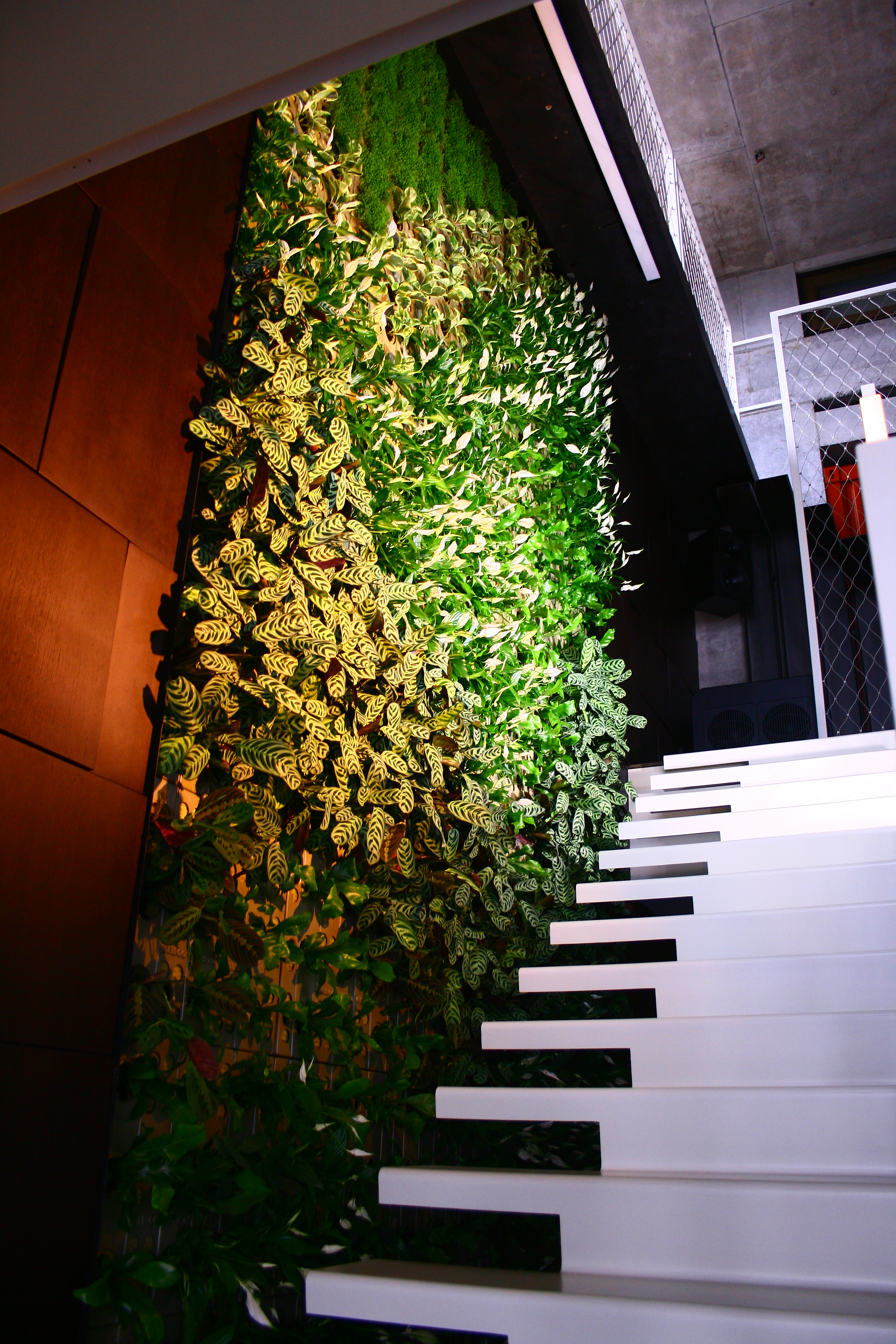 Зеленая стена в квартире, 2012г