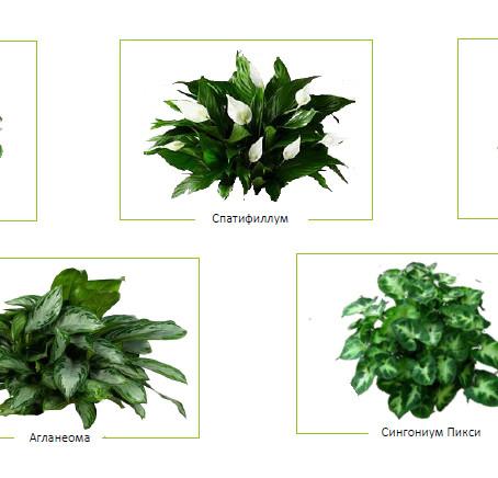 Как выбрать растения  для фитостены?