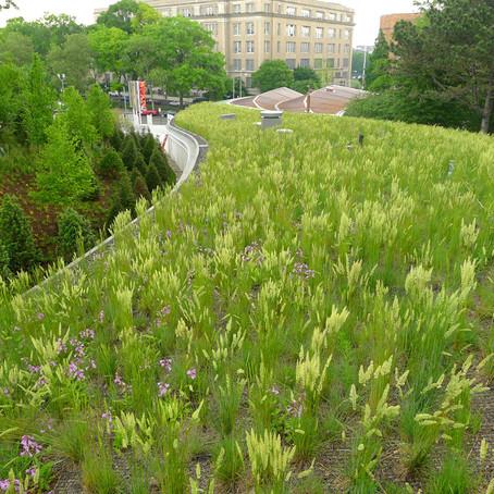 Зеленая крыша Бруклинского ботанического сада служит вдохновением для горожан