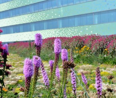 Зеленая крыша как гарантия психологического комфорта пациентов госпиталя.
