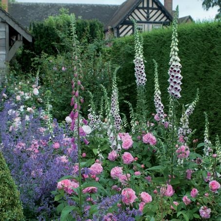 Самые ароматные розы для вашего сада