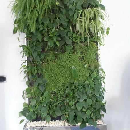 Зеленые стены в офисе