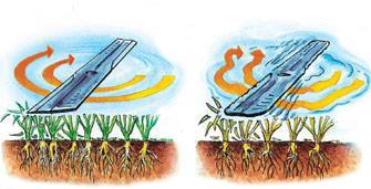 Правила успешного газона в иллюстрациях