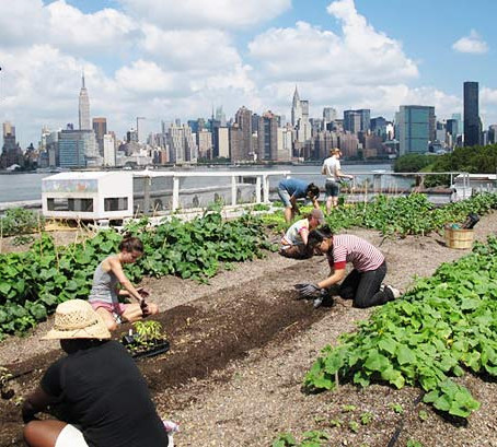Ферма на зеленой крыше (ВИДЕО)