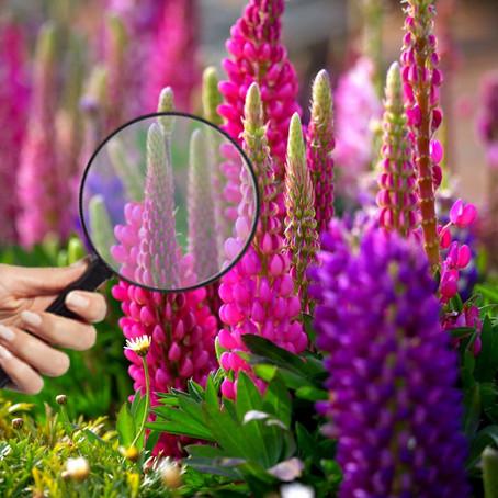 Лучшие приложения для идентификации неизвестных растений
