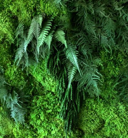 Новые тенденции стабилизированных растений в интерьере
