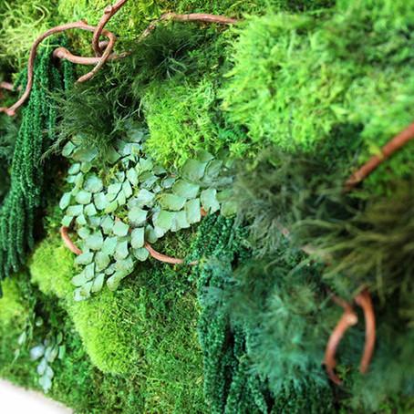 Стабилизированные растения - новый акцент в эко дизайне