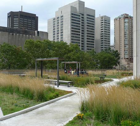 Зеленые крыши покроют весь Торонто!