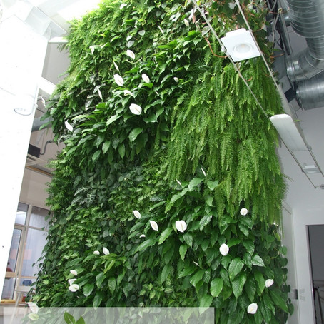 Терминология в озеленении стен