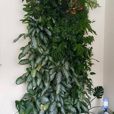 Побочные эффекты удобрений в зеленой стене