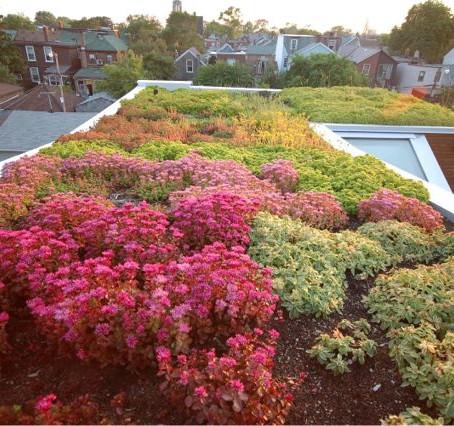 Трёхуровневая зеленая крыша
