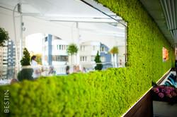 Декоративный мох на террасе, TSARSKY