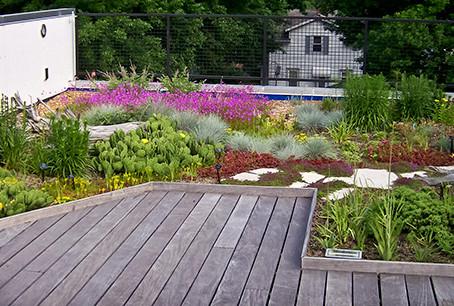 8 лучших источников литературы о зеленых крышах