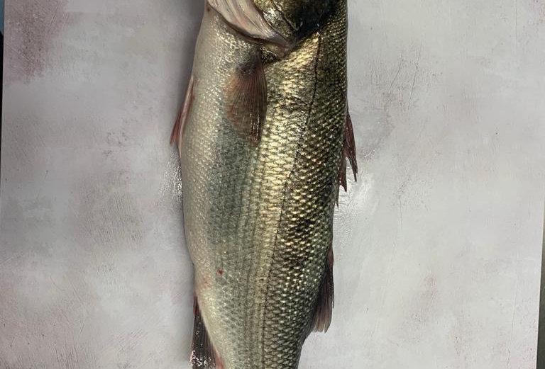 Sea Bass Wild Whole - Fresh