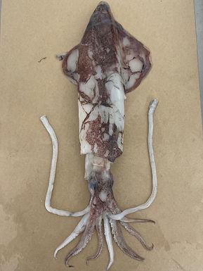 Squid - Fresh