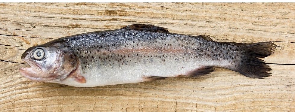 Rainbow Trout Whole - Fresh