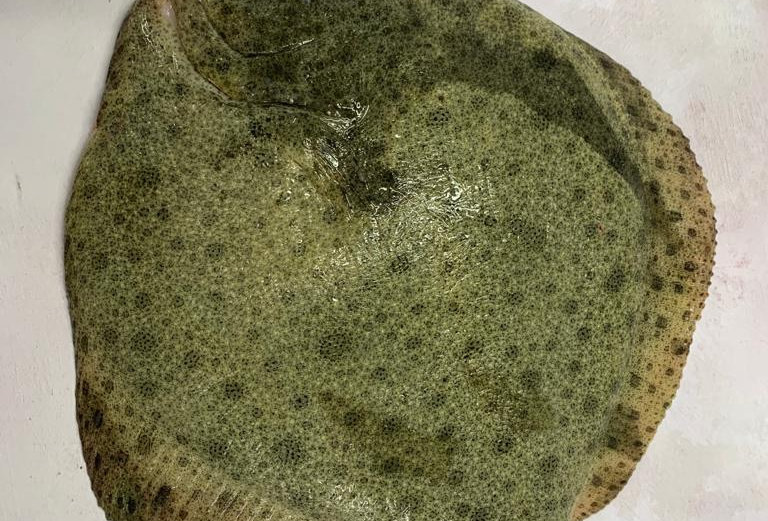 Turbot Whole Farmed - 700-900g