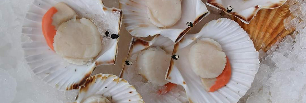Dry Cut South Coast Scallops - Fresh
