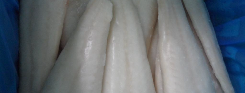Haddock Fillets (Skinless/Boneless 20%Glaze) - Frozen
