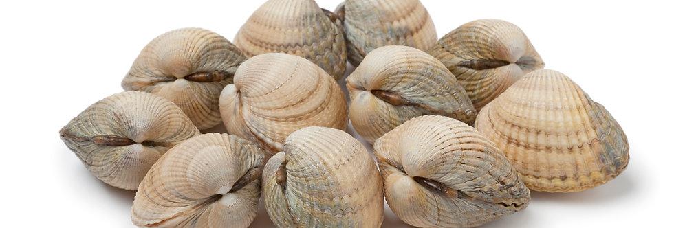 Clams Fresh Palourde 1kg net - Fresh