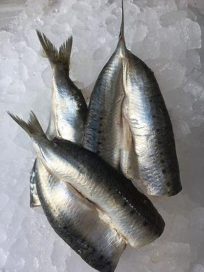 Sardine Fillets 1kg - Fresh
